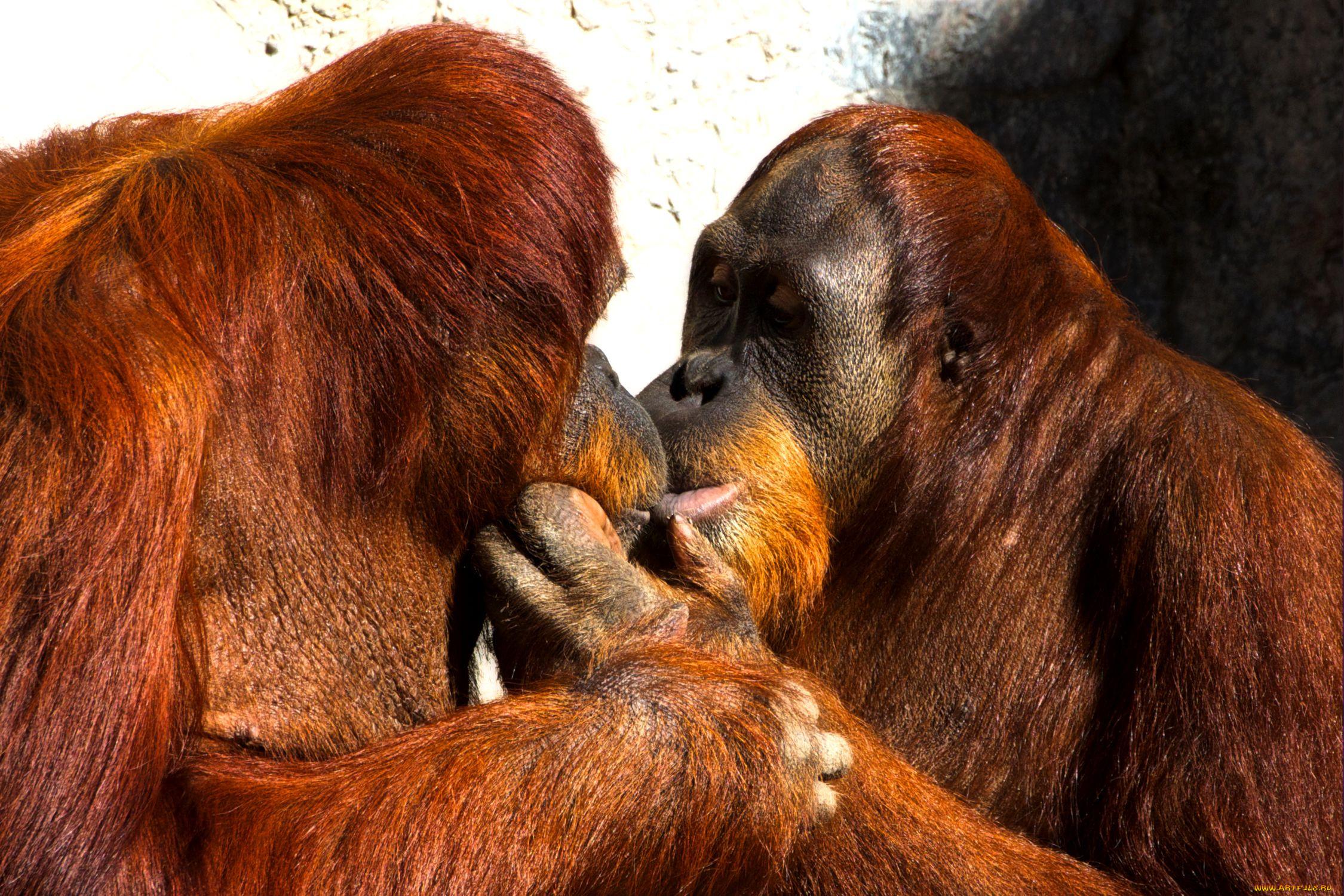 Картинки животных поцелуйчики